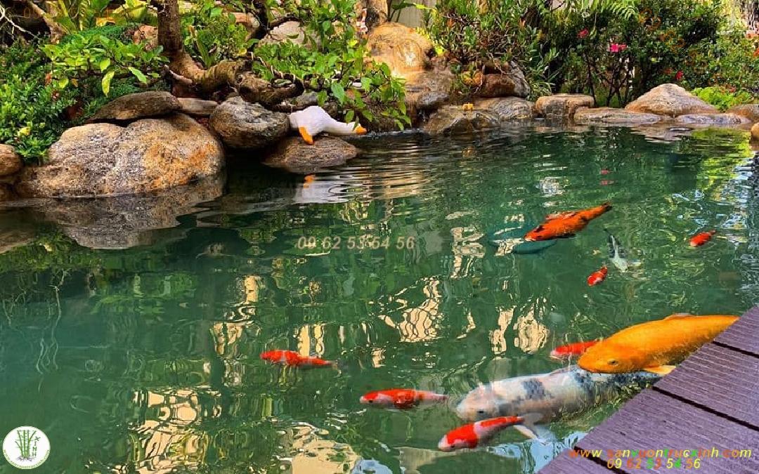 Hồ cá Koi sân vườn bằng đúc xi măng chìm