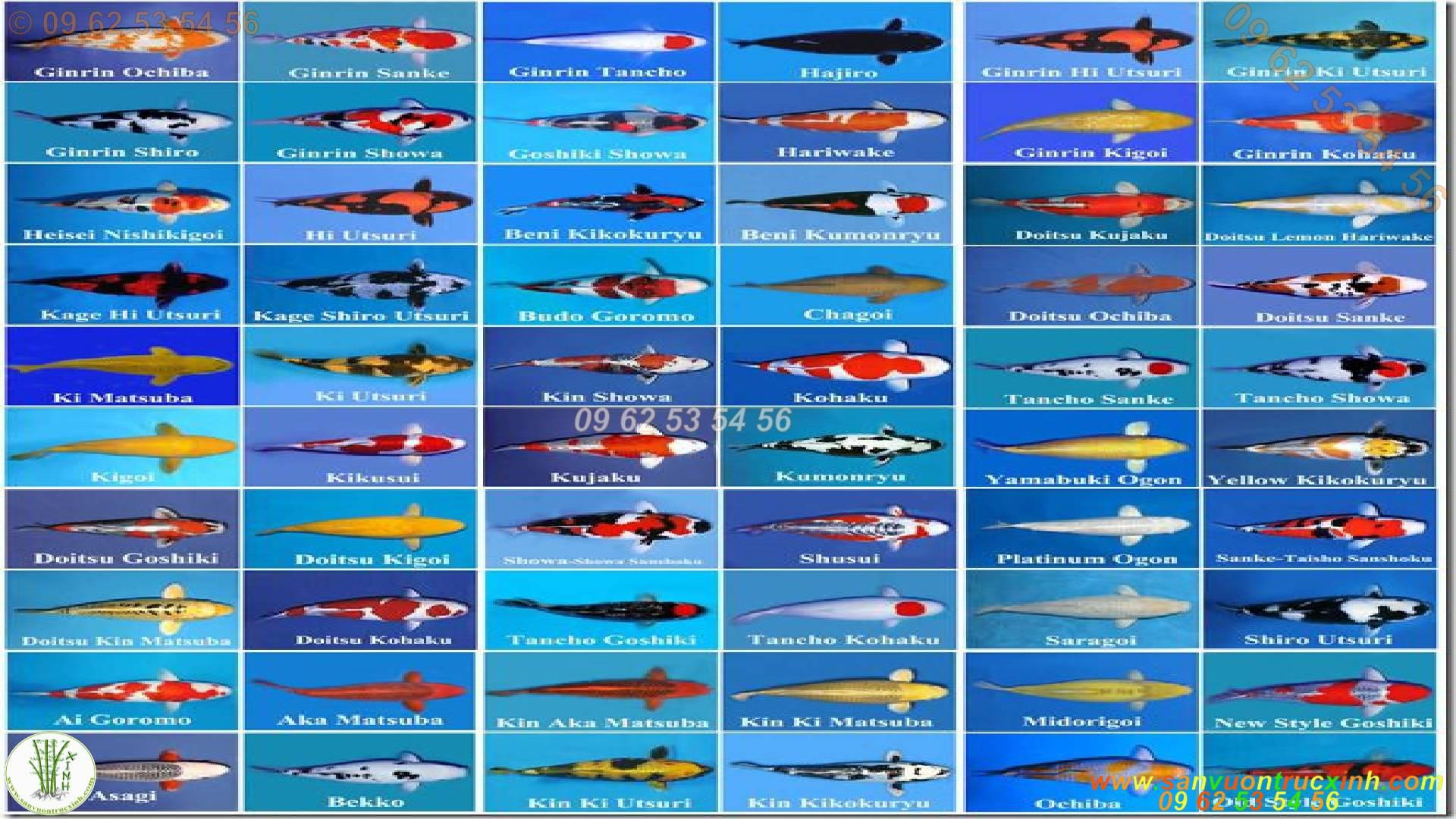 Bảng tên danh sách cá Koi Nhật