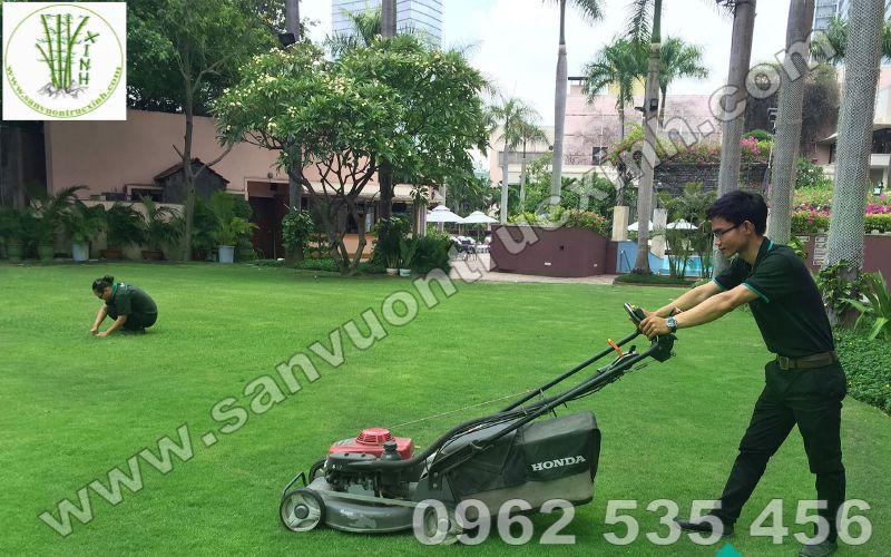 Cắt tỉa cây cảnh thảm cỏ với các thiết bị máy móc chuyên nghiệp