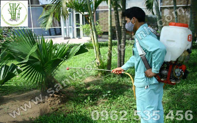 Chăm sóc diệt trừ sâu bệnh thường xuyên