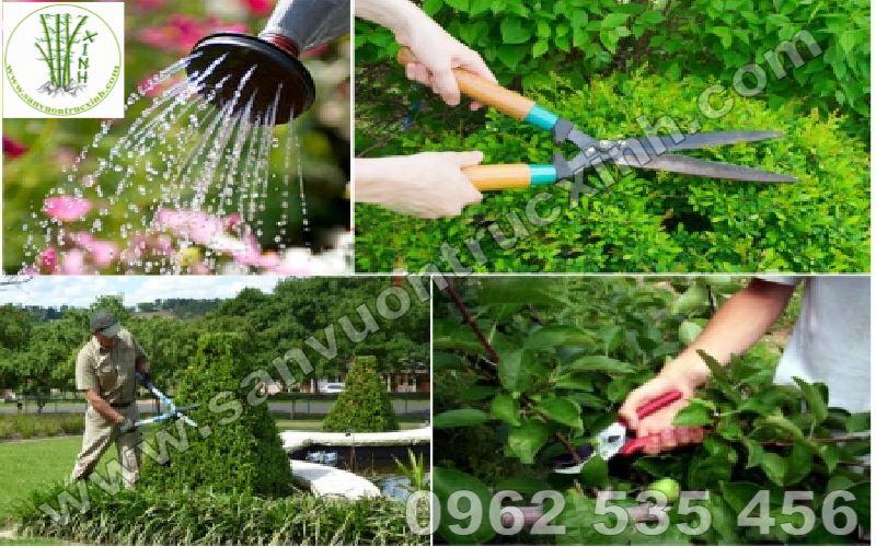 Sân Vườn Trúc Xinh cung cấp dịch vụ chăm sóc cảnh quan trọn gói